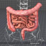 DL3D_Intestines_1