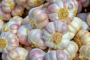 pink-garlic-under-bright-sunlight-closeup-image-34440557