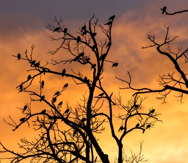 silhouetted_birds_in_a_tree_7515037378