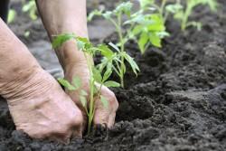 1435255458_Gardening-250x167