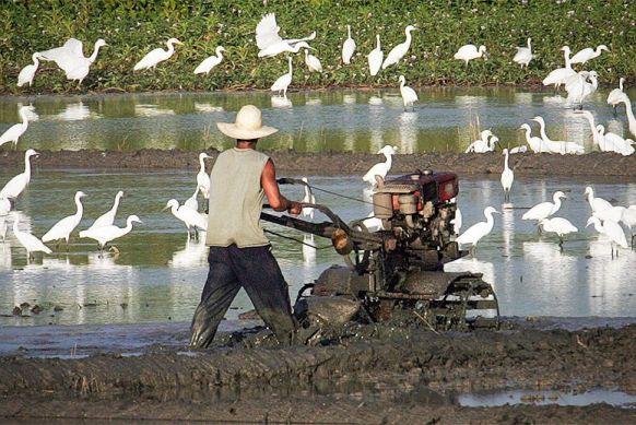 wetlands-birds