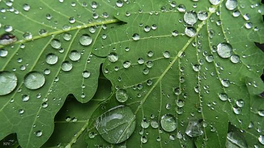 RainyLeafNJV