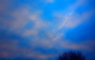 v_birds_december20_2014