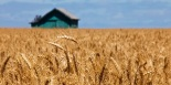 us-wheat-harvest-pic